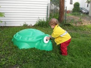 Baby turtle sandbox