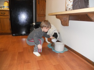 feed dog 002
