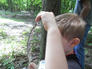 Peter found this turkey feather along the trail