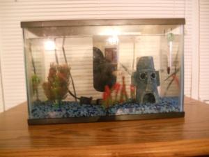 fish tank 004