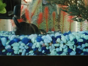 A close up of our fish tank.